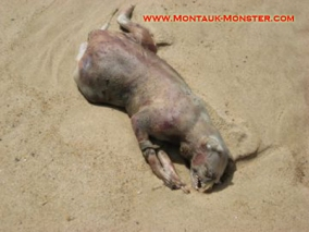 long_island_montauk_monster