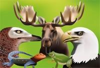 tetrapod-zoology