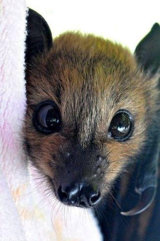 bat cute