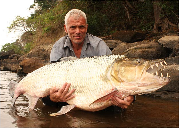 killer-fish-goliath-tigerfish-pictures3